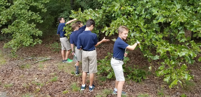 7th grade finding leaves for their leaf collection