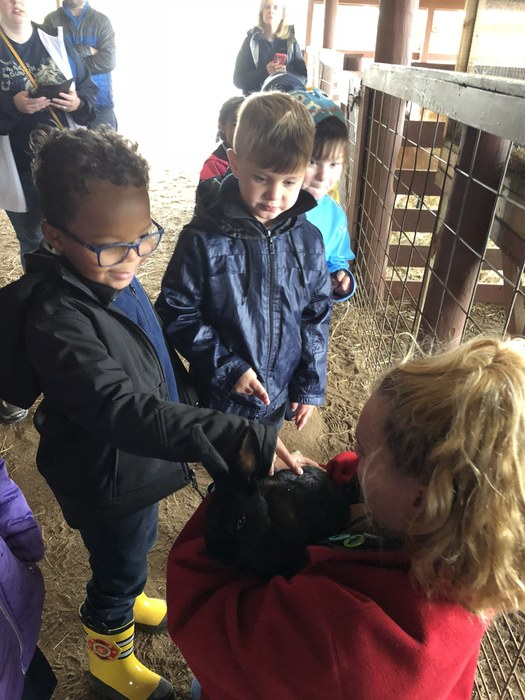 Kindergarten loved visiting Heifer Ranch this week!