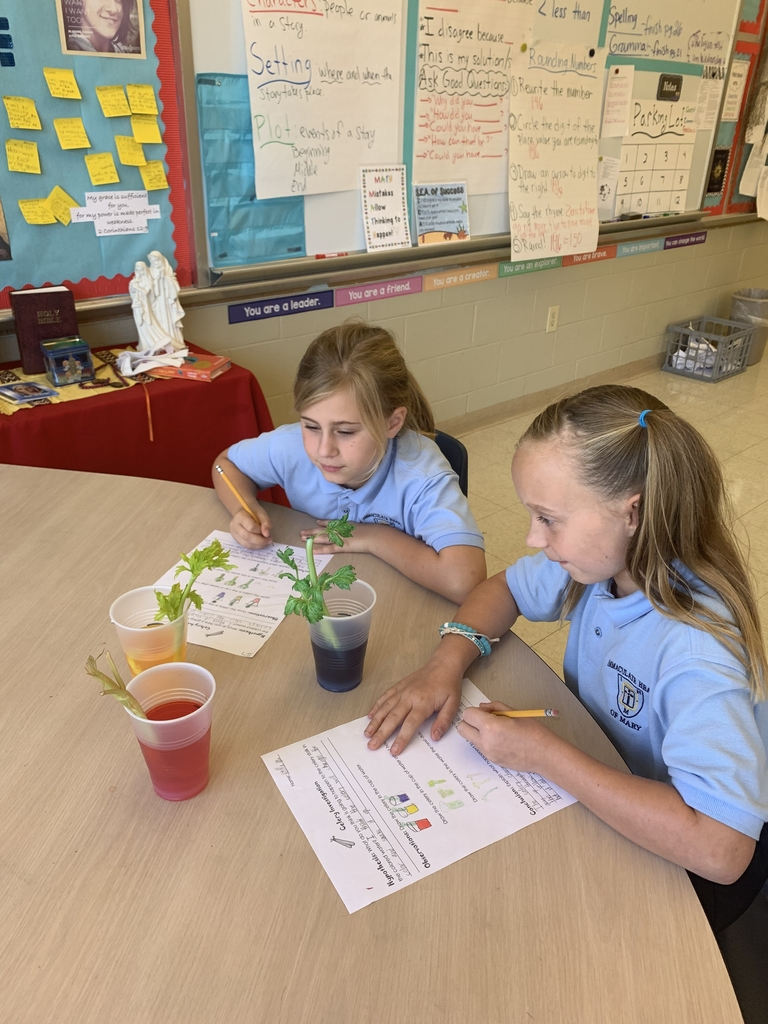 3rd grade observed the role of stems in water transportation for plants